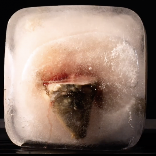 A fish head in a block of ice