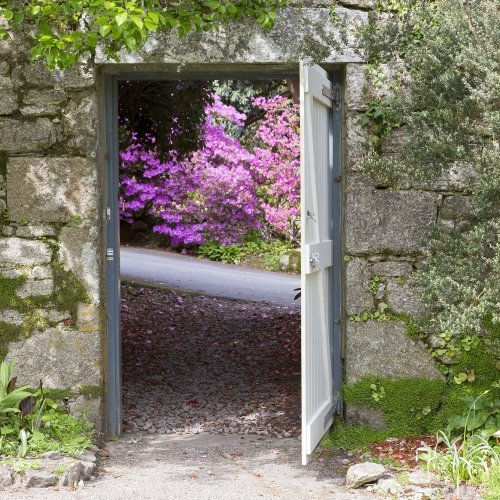 Looking through a gate with pink flowers.