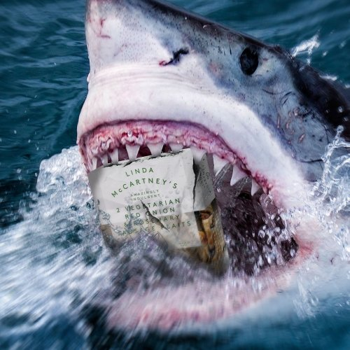 Shark with a packet of Linda McCartney sausages in its jaws