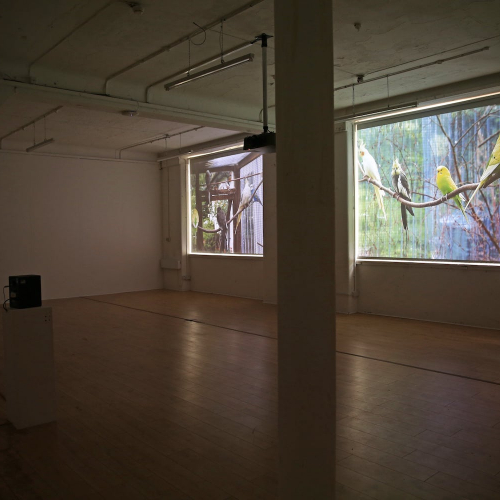 Gallery space with projections of birds