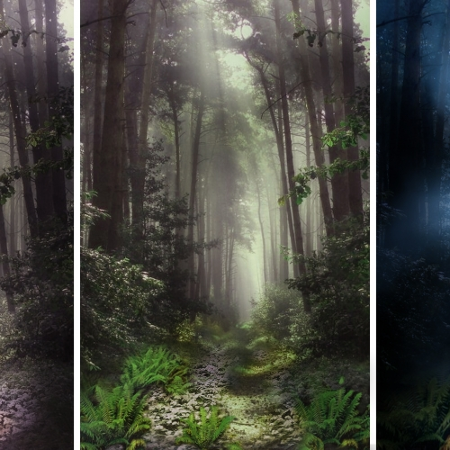 Woodland scene shown in three different lights.