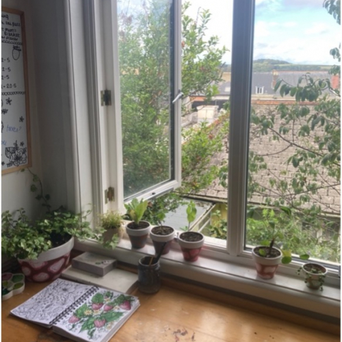 Plants in the window of a student bedroom