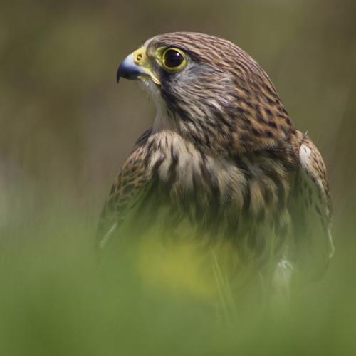 Close up of eagle.