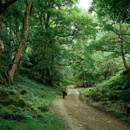 A person walking along a path surrounded by leafy trees