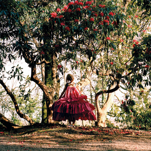 A Falmouth University Fashion Photography shoot of a person in a large pink dress under trees