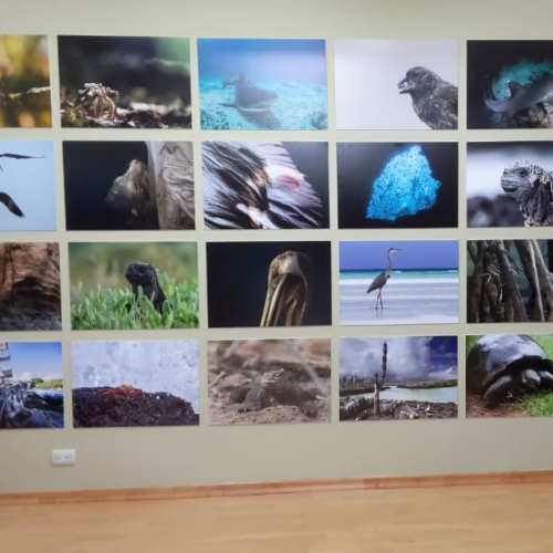 The Falmouth Wall of images at the Charles Darwin Foundation, Galapagos