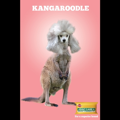 Advert for Pedigree of a kangaroo crossed with a poodle.
