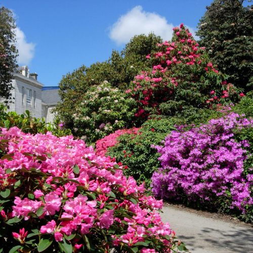 Penryn Campus gardens with colourful azalea and rhododendron plants