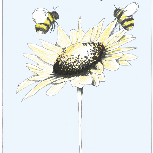 Illustration of two bees talking over a sunflower