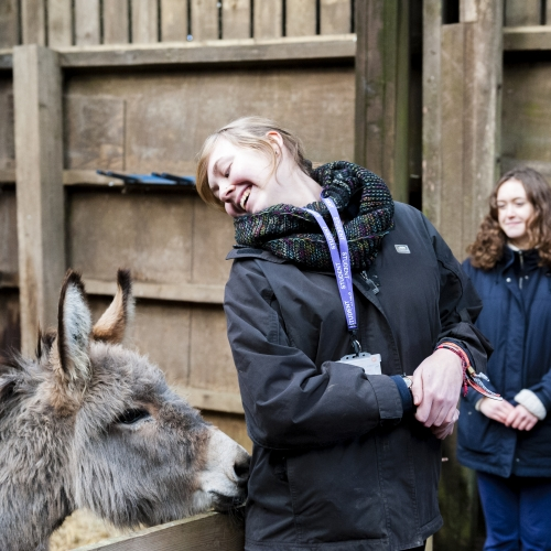 Donkey nudging student with nose.