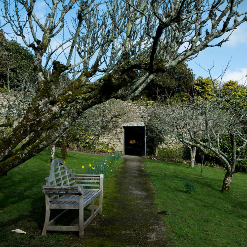 Tremough gardens at Penryn Campus with walled garden and apple trees