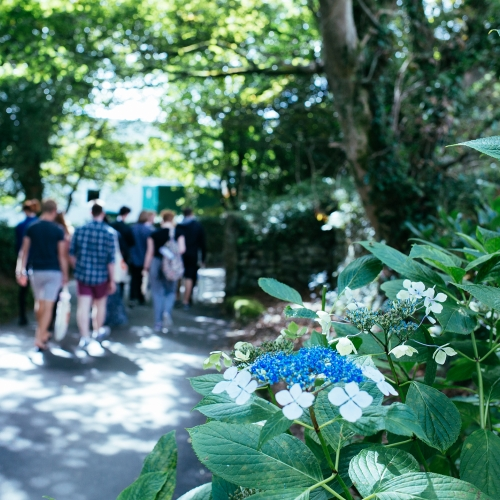 Students walking through gardens
