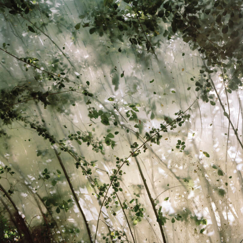 sunlight coming through tall branches with leaves